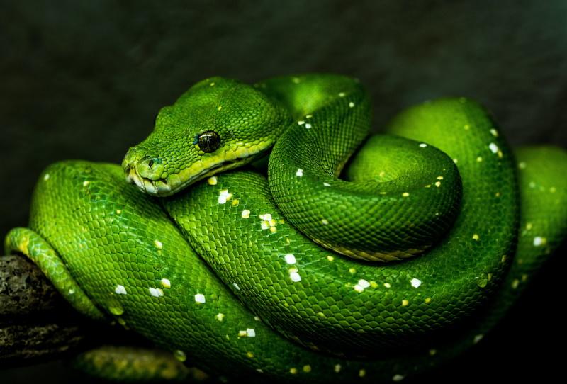 に 噛ま れる 夢 ヘビ 【夢占い】蛇の夢は縁起がいい?蛇の状態や行動別の意味を徹底解説!